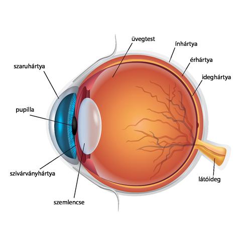 leckék a szemlátáshoz a látás javításának módszerei Saveliev