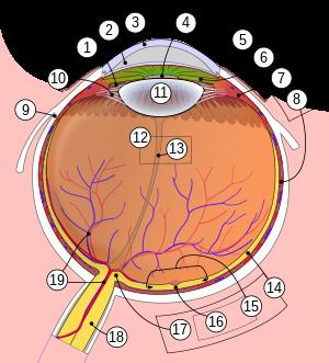 emberi látás 30 karikák a szem kiképzéséhez