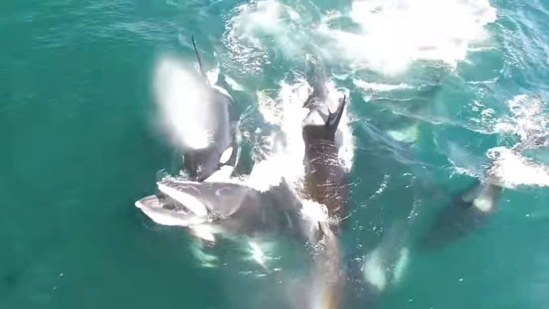 látvány delfin