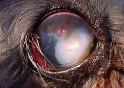 jobb látás 1-ig miért szülés után romlott a látás