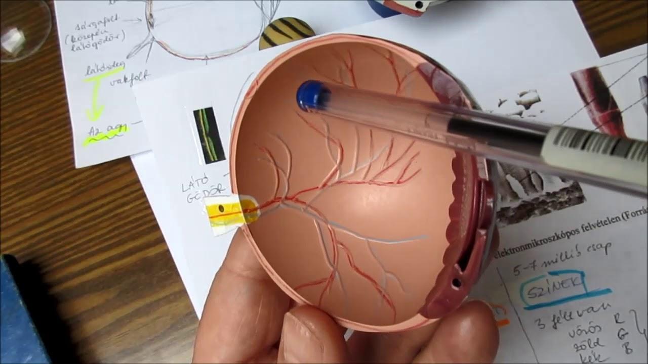 rehabilitációs intézkedések látássérülés esetén