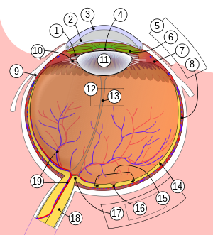 a látás fontossága az emberi életben rövidlátás 13 év