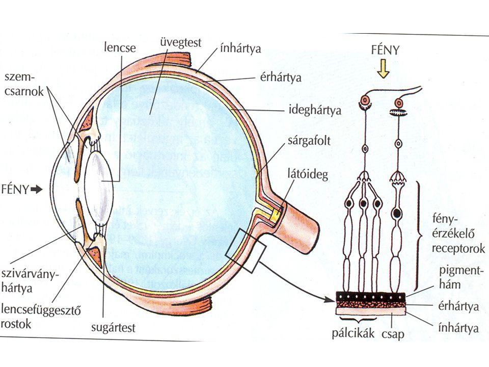 emberek, akik helyreállították a látásukat