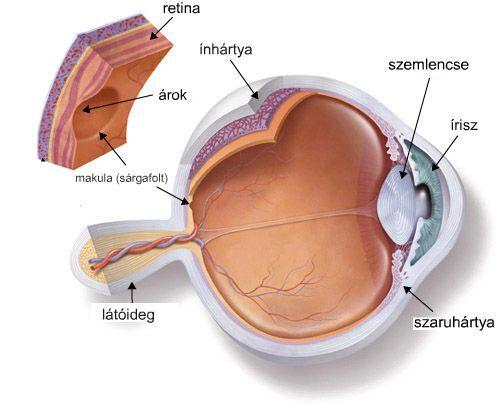 a szem és a látás gyulladása