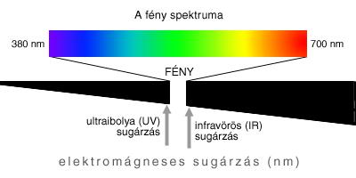 a sugárzás hatása a látásra van-e látnivalója a csigáknak