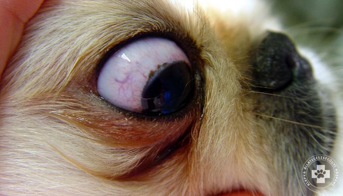 az egyik szem 10% -os látással