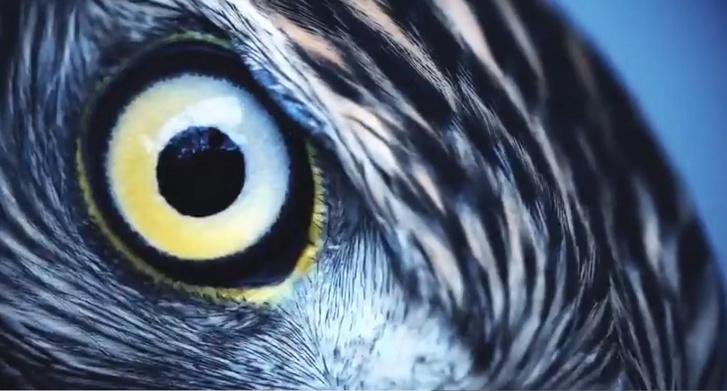 az egyik szem látásélessége 0 09 miért mínusz a látásom