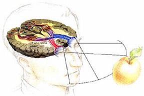 az emberi látás fokozott terhelése