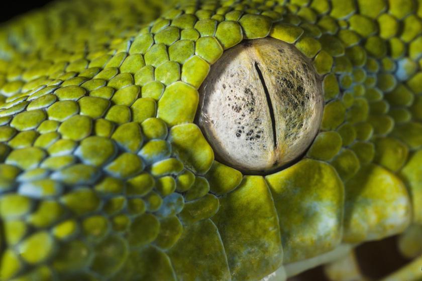 A kígyók hőlátó képessége segítheti a retina gyógyítását | Magyar Nemzet