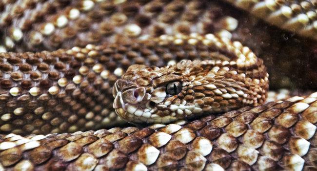 Kígyók – Wikipédia