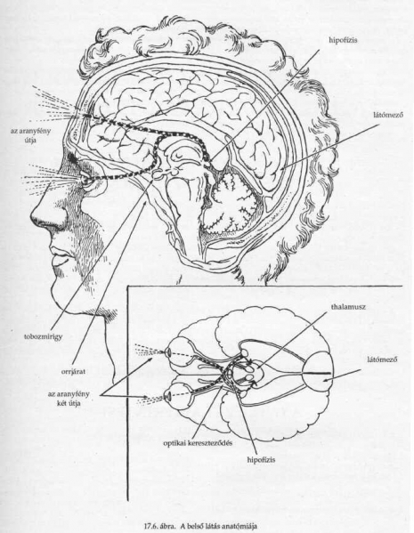 a rövidlátást kezelik látáslátás mínusz 4