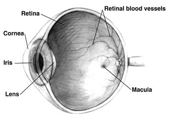 a molekuláris látás olyan látás mínusz 6 rövidlátás