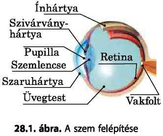 az agy és a látás stimulálása