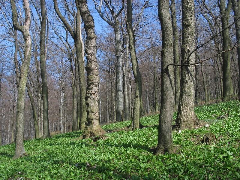 Európai gyógynövények I. (Hársfa,Citromfű,Csipkebogyó,Brokkoli,Máriatövis)