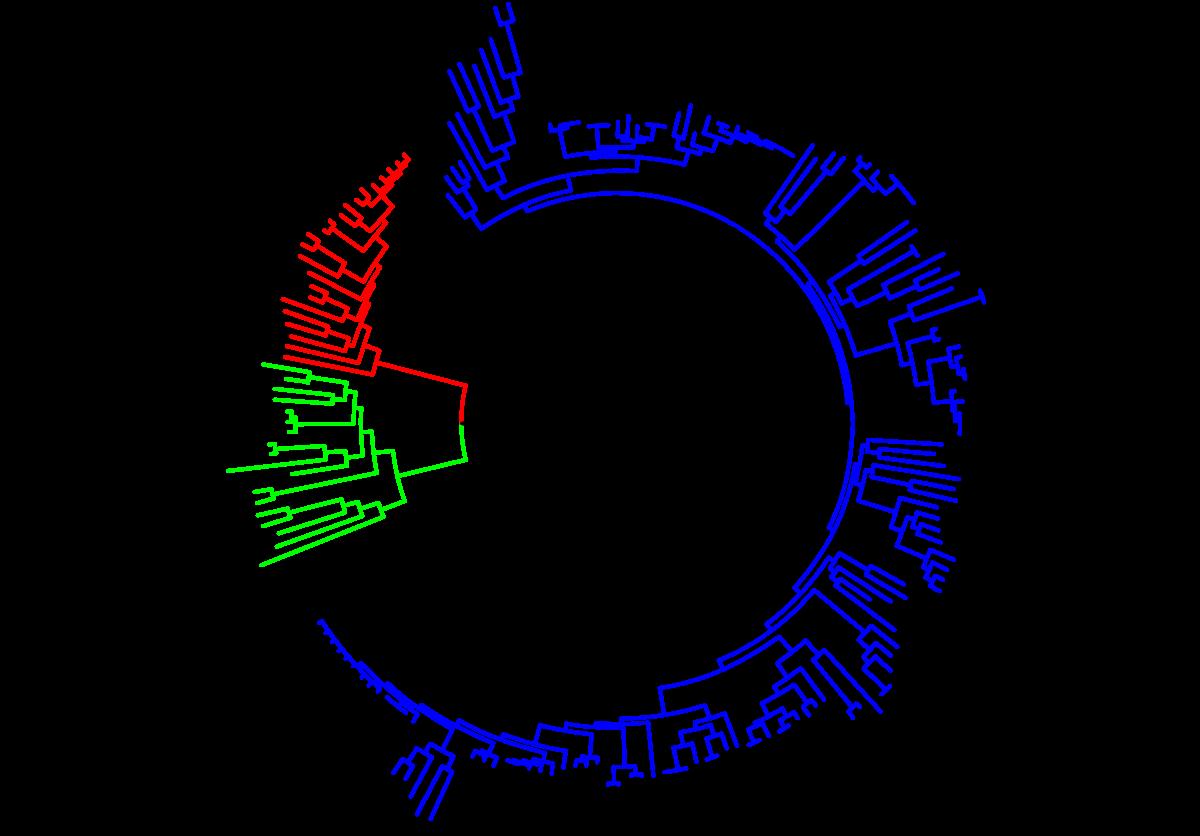 Az optogenetika és a látás | MTA KOKI