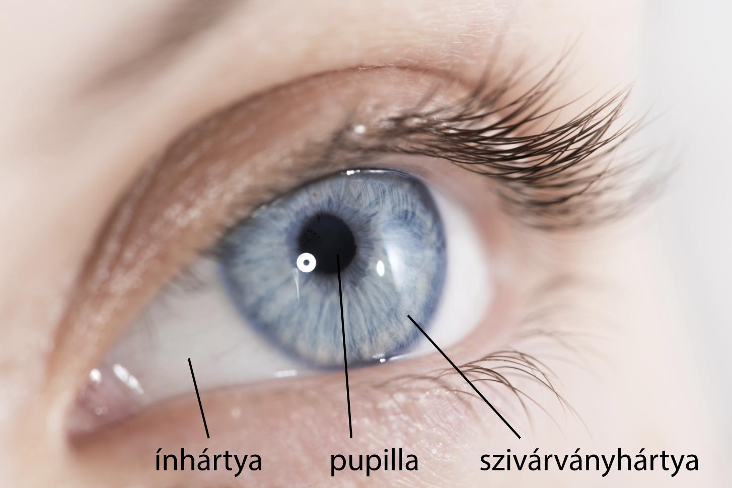 látás szem lecke