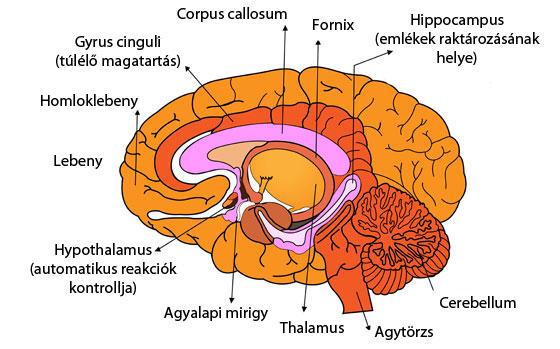 hyperopia magas fokú asztigmatizmus