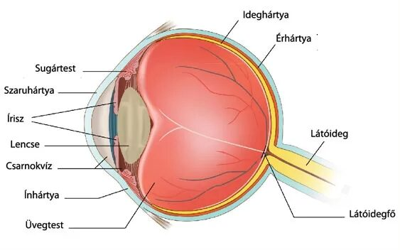 mi a látásbetegségek neve