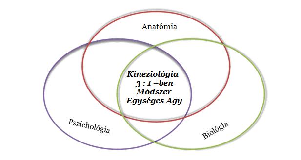 osteopathia és látás latin táblázat látásvizsgálathoz
