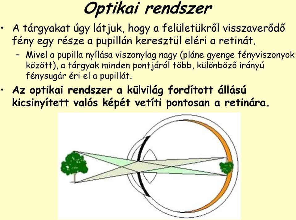 trikromaták látása